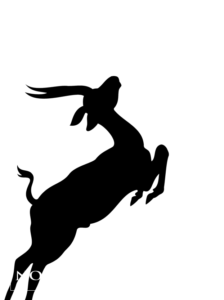 Nouvelles d'Afrique Production